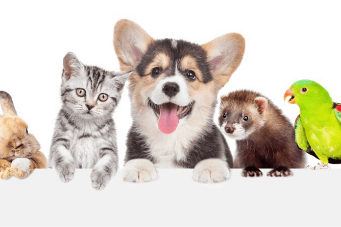 Giải mã giấc mơ: Các con vật xuất hiện trong mơ là biểu tượng cho điều gì?