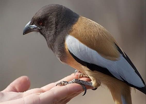 Chim bay vào nhà là điềm gì? Có mang lại may mắn không?