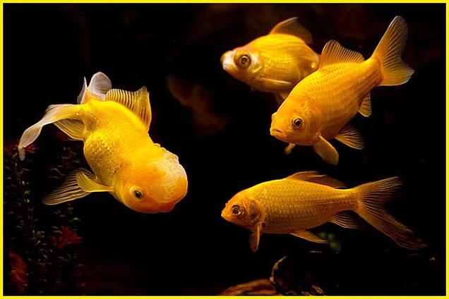Ý nghĩa của giấc mơ thấy cá