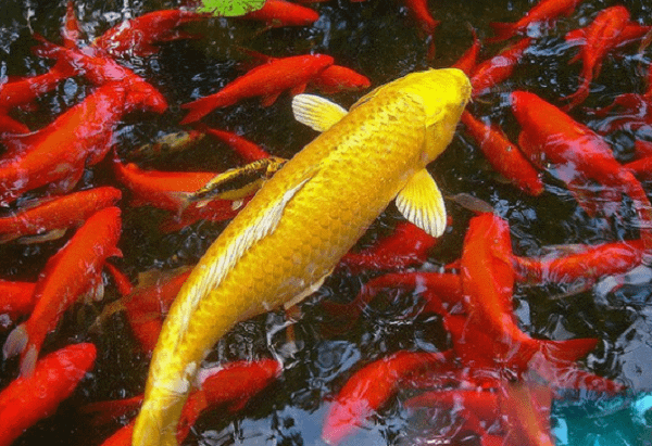 bắt được nhiều cá