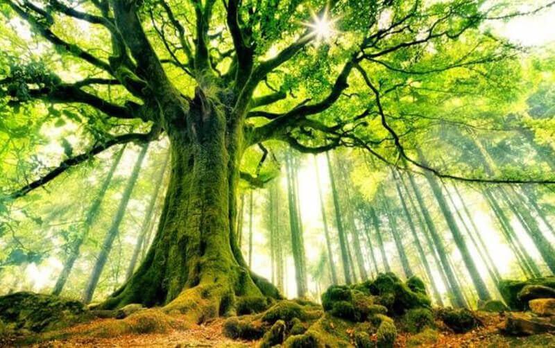Giải mã nằm mơ thấy cây cảnh là điềm báo gì?