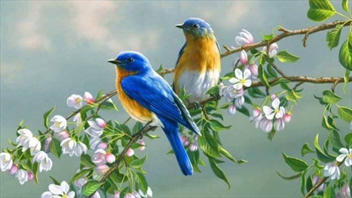 Giải mã nằm mơ thấy bắt được chim