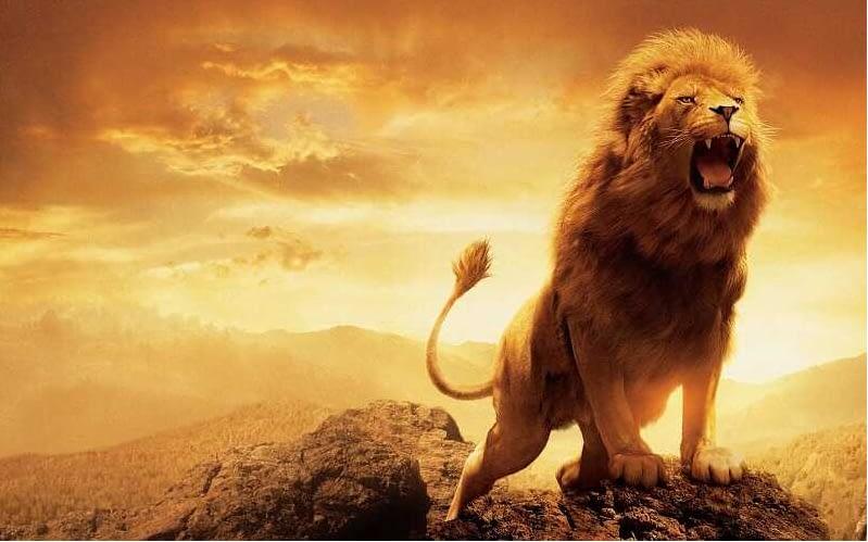 con sư tử