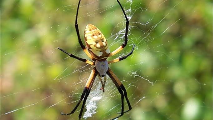 Mơ thấy nhện & điềm báo thú vị về giấc mơ này