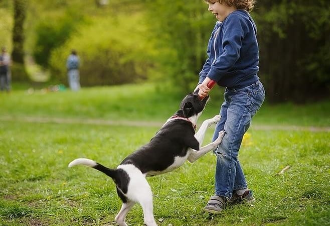 Mơ thấy chó cắn là điềm gì?